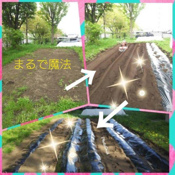 ユートピア川原 ☆畑☆